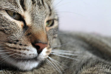 Filou the Cat by theperfectmind
