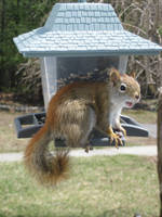 20090410 Squirrel Says Hi by PetersonPhotos