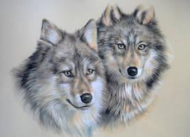 Wolf study 2 by artibird