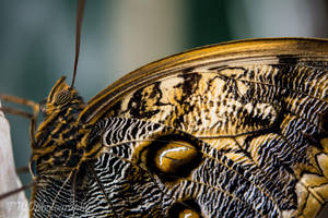 Butterfly by TWOphotography