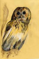 Owl by leCCio