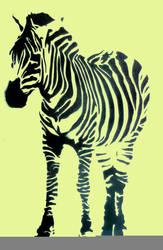 zebra by louuu