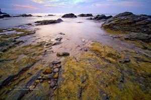 lichen on rock V by 5-zal