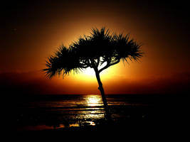 Tropical Silhouette by Meggsy