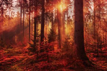 Fall by MiR-S
