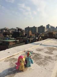 Ponies around the World (Yeoksam) by loliamapie