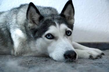 Blue Eyes by WhiteWolf0001