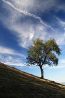 Tree on field of straw by Osiris81