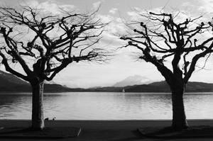Creepy trees by Osiris81