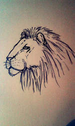 Lion by MrPabooom