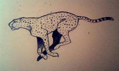 Cheetah by MrPabooom