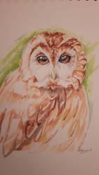 Tawny Owl Copics by Anneuh