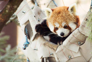 Hanging in my hammock. by Ravenith