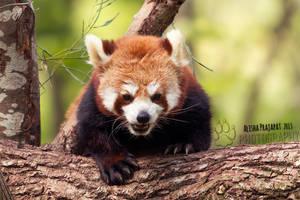 Hi, I'm Pong! by Ravenith