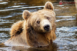 Nora, the brown bear. by Ravenith