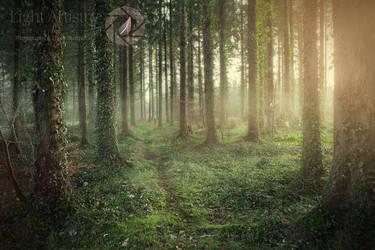 Irish Forest by Lightartistry