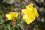 Yellow Flower 2 by photoshop-stock