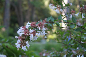 Flower VIII by photoshop-stock