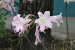 Flower IX by photoshop-stock