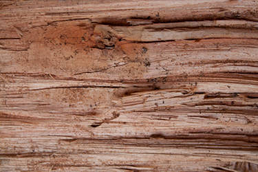 Wood 1 by photoshop-stock