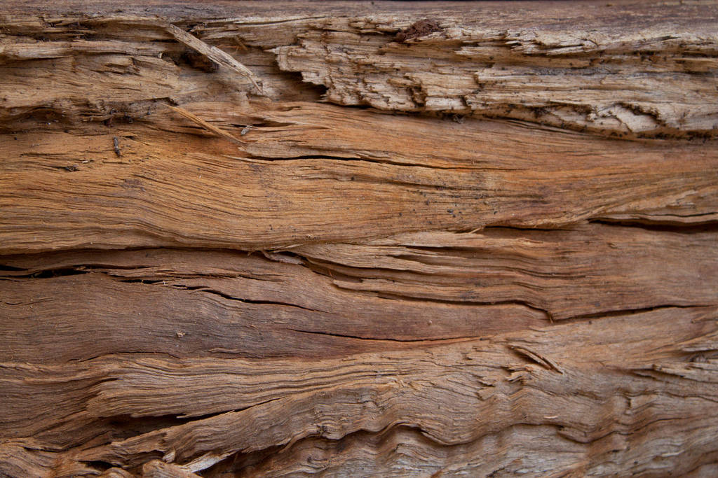 Wood 3 by photoshop-stock