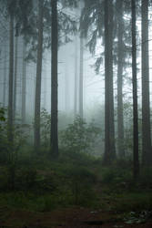 Forest 1 by LetMeBePhotography