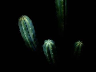 Trichocereus pachanoi HDR by Plantsoma