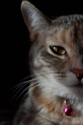 Moms Cats - Speckle Portrait by pitadragon