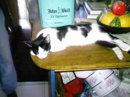 My Cat Kipper Sleeping. by twinkid