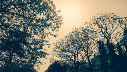 Bunch of trees vintage effect by Mischievous-Hyena