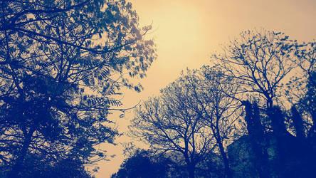 Bunch of trees bluish effect by Mischievous-Hyena