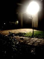 wiejski nocny zagajnik. by mlodygrabasz