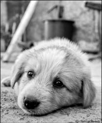 sad puppy. by christosR