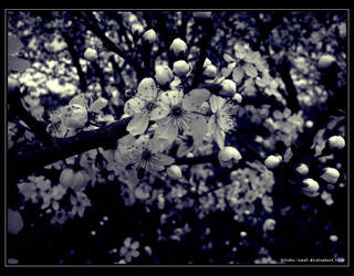 Spring is here by Tristis-soul