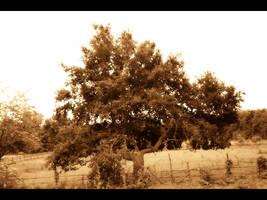 Tree by TheatreAyoo