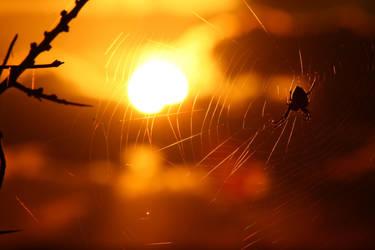 sunset spider by Ringtailmaki