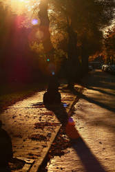 October trees by Ringtailmaki