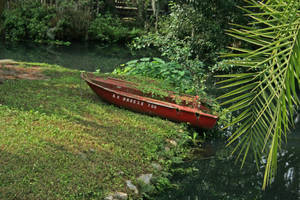 Boat in Swamp Stock by GloomWriter