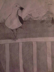seagull by Catherine211998