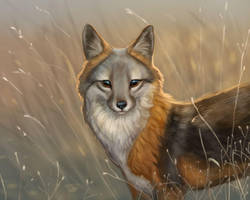 Island Fox by Noctualis