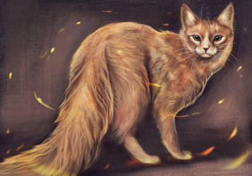 Ember Cat by Noctualis