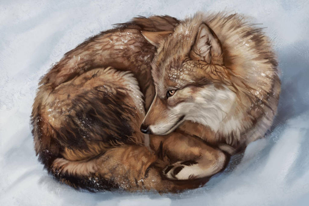 Wolf Study by Noctualis