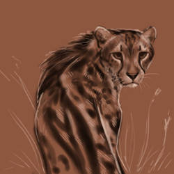 Cheetah Sketch by Noctualis