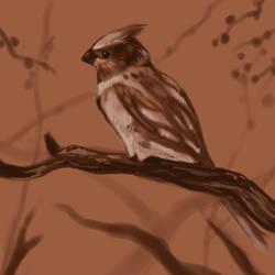 Bird Sketch by Noctualis
