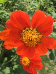 Orange by MirrorandImage