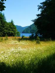 The Meadow. by darklilly45
