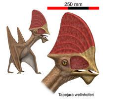 Tapejara wellnhoferi by paleopeter
