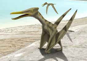 Gallodactylus canjuersensis  by paleopeter