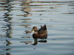 Relajandose en la laguna by Lord-LestatDlaCuadra