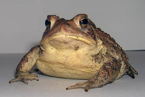 Toad3 by ParanoidFreaksStock